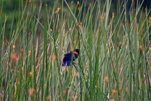 Bird Watchers Will Enjoy Mountain Lake Park