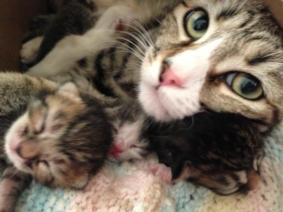 Tigress and Babies