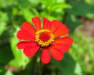 Wild Flowers Morelia Mexico