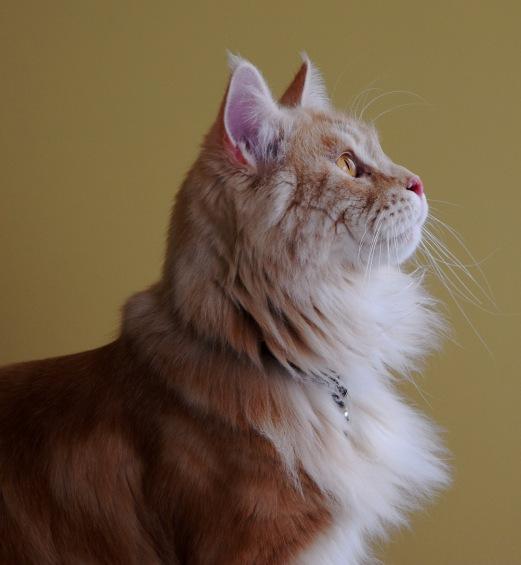 Beautiful Sammy's Profile