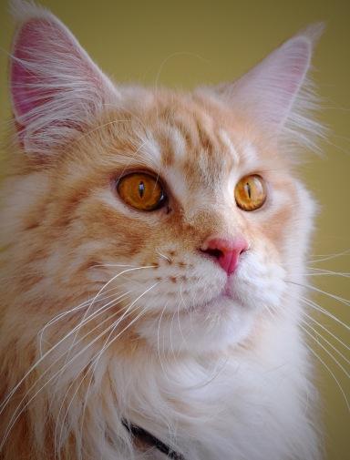 Sammy's eyes up close