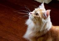 Sammy's Dramatic Whisker Pose