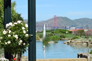 The view from paths near the Presidio Starbucks