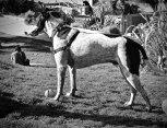 #dogs, #DoloresPark